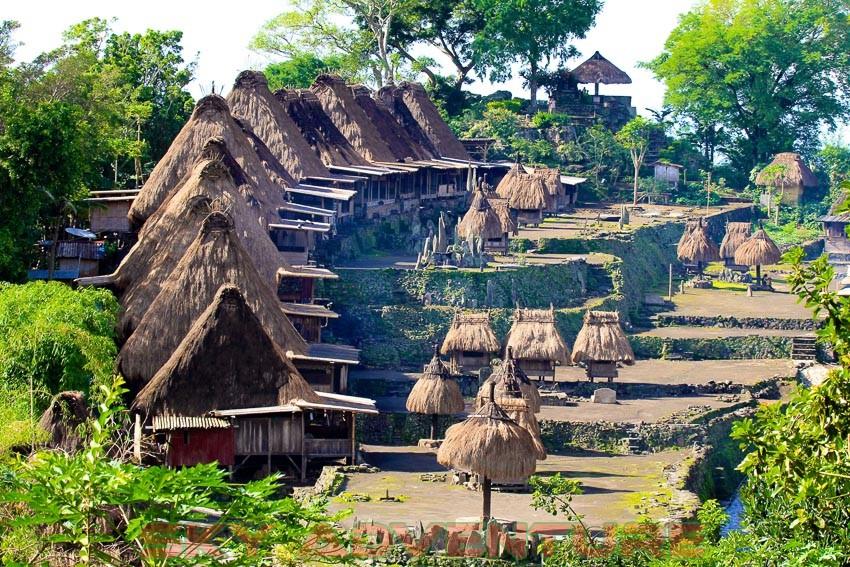 Indonesia asli garut - 3 10