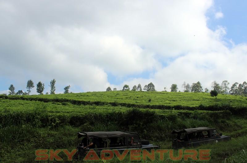 Outbound Bandung, Outbound Lembang, Company Gathering Outbound, Hutan Sukawana, Cikole (5)