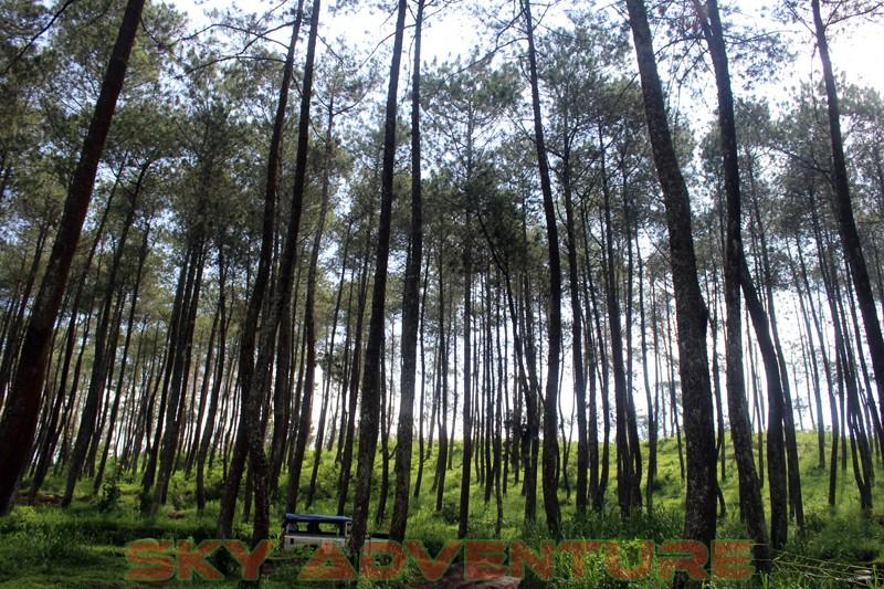 Outbound Bandung, Outbound Lembang, Company Gathering Outbound, Hutan Sukawana, Cikole (6)