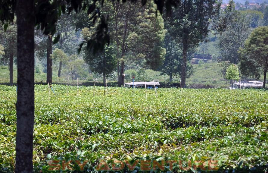 wisata alam dengan land rover melalui kebun teh, gambung, gunung tilu, riung gunung, kampung laspada, rahong, situ cileunca, citere (8)